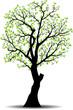spring tree sillhouete  vector