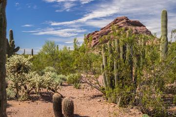 The Living Desert of the Southwest USA