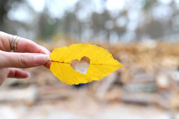 the heart which is cut out in an autumn leaflet