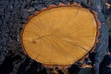 closeup stump