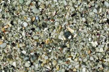 beach stones and shells background