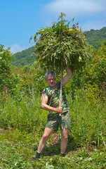 Man carrying hay 7