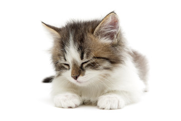 sleeping small fluffy kitten isolated on white background close-