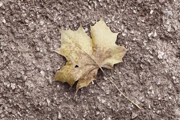 segni d'autunno