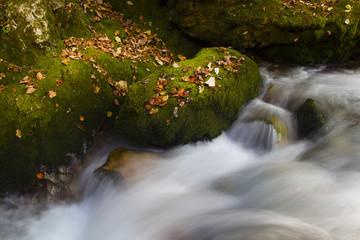 autunno lungo il ruscello