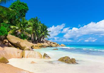 Jungle Panorama Sea