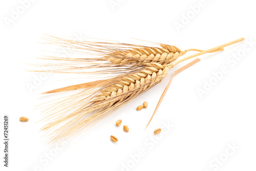 Ears of wheat. - 72451269