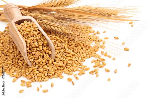 Wheat. - 72451277