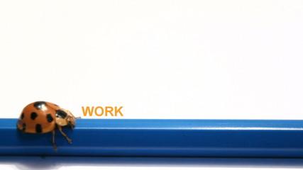 ladybug, beatle push The word Work change to Money.