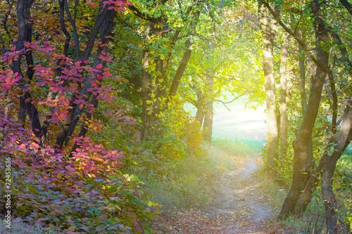 autumn forest tunnel - 72453636