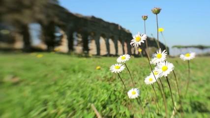 Fiori al vento con un acquedotto romano sullo sfondo