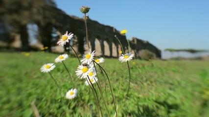 Fiori, mosca, vento, acquedotto romano