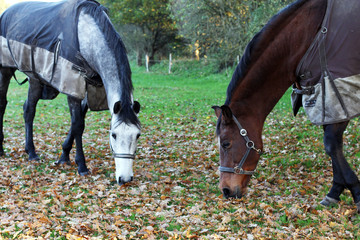 Horses in the field.