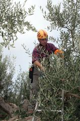 Pruner agricultural worker