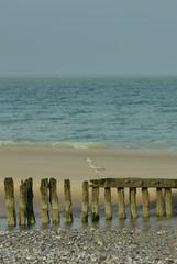 héron sur la plage