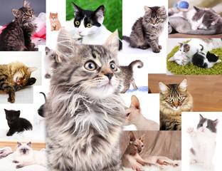 Collage of pretty cats