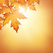 Fall background with orange autumn leaves