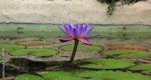 Plexiglas Water planten Flore aquatique
