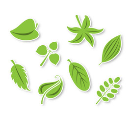Isolated vector leaves collection