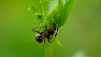 Ant looking for food in the grass