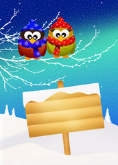 owls in winter