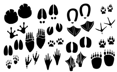 Vector animal footprint