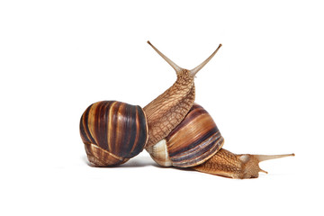 A couple of Snails on a white background