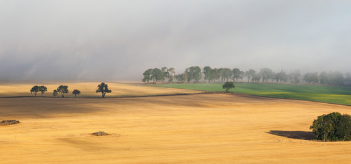 Rural landscape view