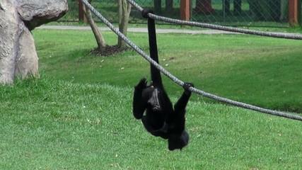 Monkey, Primate, Animal, Wildlife