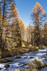 River in the forest, autumn season of Devero Alp