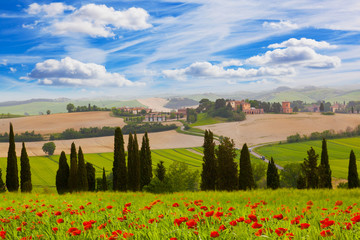 Rural landscape with blossoming poppies, Tuscany, Italy