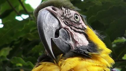 Parrots, Birds, Animals, Wildlife, Nature