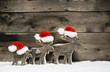 Leinwanddruck Bild - Three mooses wearing santa hats on grey wooden background