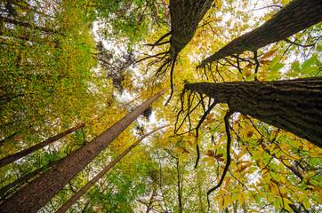 Herbstbäume :))