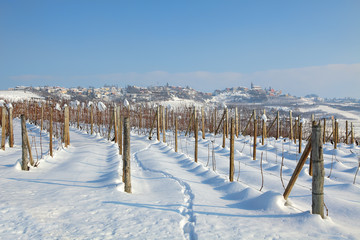 Vineyards under the snow.
