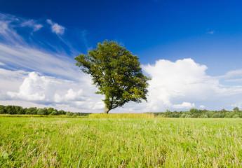 Vibrant Summer Grass Land