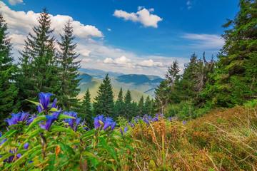 Wonderful view of landscape with mountains Carpathians.