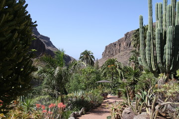 Nature on the island of Gran Canaria