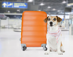 Airport dog
