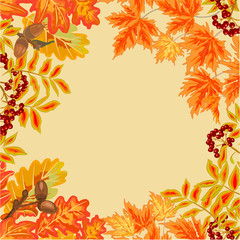 Frame from autumn leaves vector