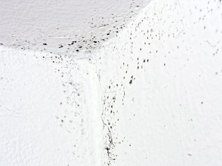 Unhealthy mould, mold in house, condensation. Detail.