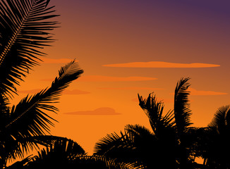 silhouette palm plant with sunset