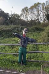 Scarecrow in a vegetable garden in a countryside