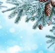Winter Christmas background with fir tree branch with cones