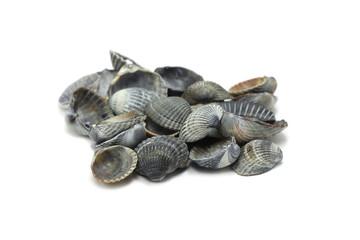 black seashells on a white background