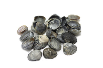 several black seashells on a white background