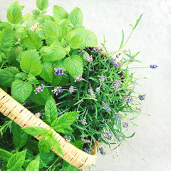 Lavender and mint in a basket