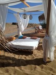 relax on desert