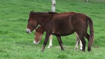 Horses, Farm Animals, Equine