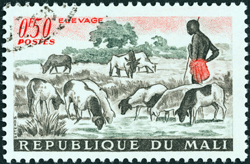 Sheep at pool (Mali 1961)